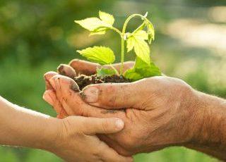 Sua padaria mais Verde: Iniciativas que você pode adotar